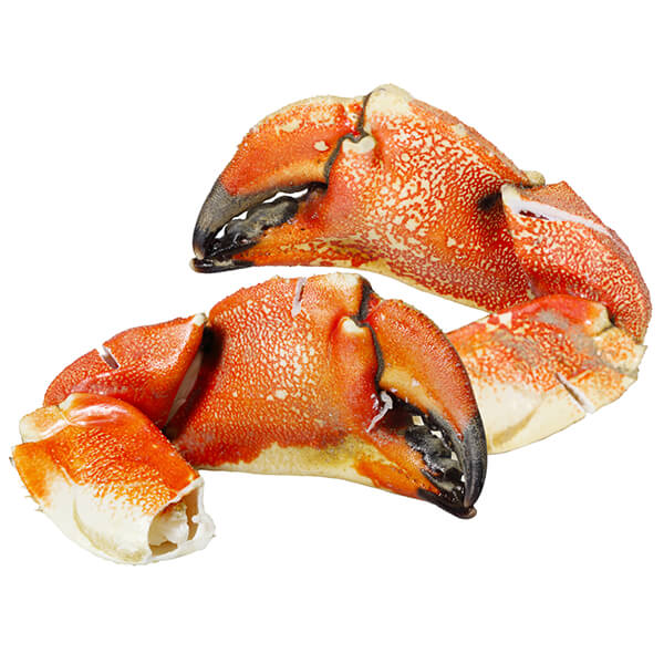 Jonah Crab Claws Cooked   LOBSTER 207