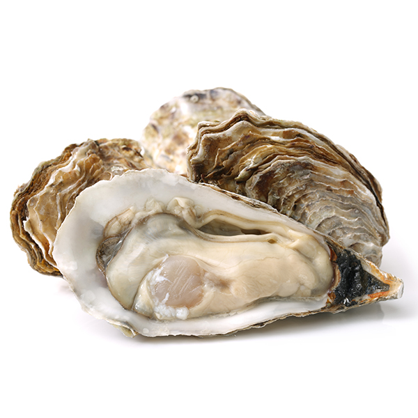 Maine Oysters Shipped by the Dozen